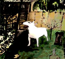 BULL TERRIER by Matterotica