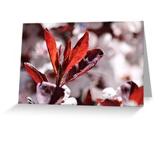 Japanese Cherry Tree (3) Greeting Card