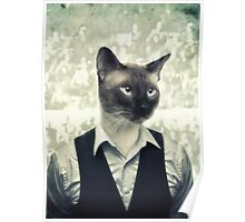 Fancy Cat Poster
