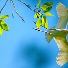 Cattle Egret In Flight by imagetj