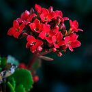 Blooming Succulent by heatherfriedman