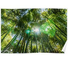 Shinning bamboo forest Poster