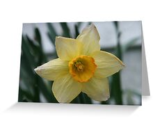 April Showers Bring May Daffodils Greeting Card