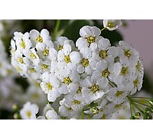 branch with flowers Photographic Print