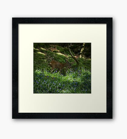 Deer in the Blue Bells Framed Print