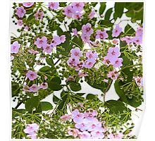 branch with flowers Poster