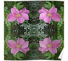 Dog roses in reflect Poster
