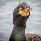 Cormorant Stare by vivsworld