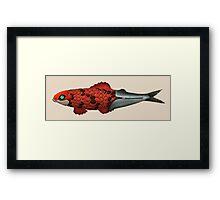Koi Sardine Framed Print
