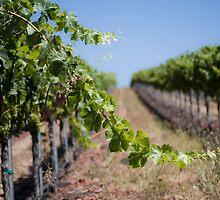 Vines by williamsrdan