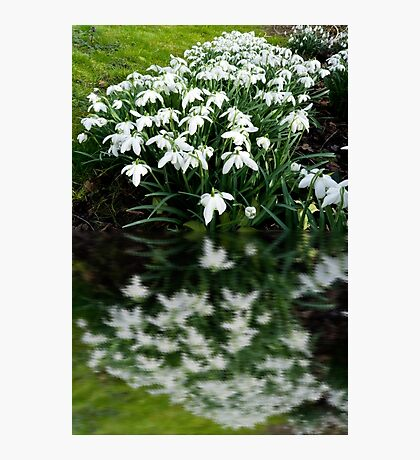 Snowdrops in reflection Photographic Print