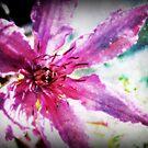Clematis Flower by angelandspot
