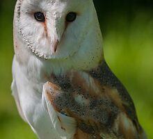 Barn owl in colour by cuttlefish714