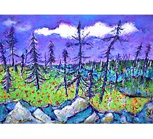 Fir Trees in the Taiga Photographic Print