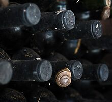 Wine and Snails by williamsrdan