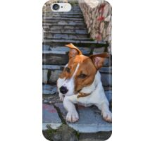 Jack Russell Terrier iPhone Case/Skin