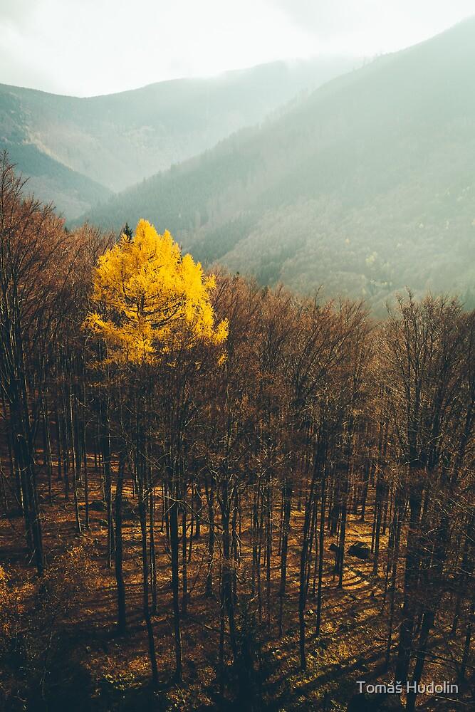 Loner by Tomáš Hudolin
