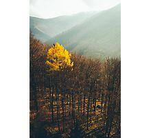 Loner Photographic Print