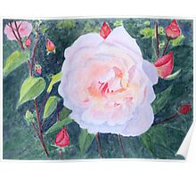 English Rose, by John Rees Poster