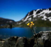 Mountain lake bliss by williamsrdan
