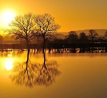 'Golden Flood' by NaturesEarth