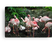 Pink Flamboyance Canvas Print
