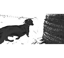 Reservoir Dawg Photographic Print