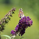 Butterfly With Flowers by Cynthia48