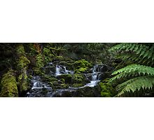 Quaille Cascades Photographic Print