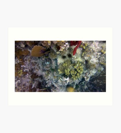 Under The Sea II Art Print
