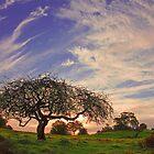 Lone Tree and Windy Sky by Jim McDonagh