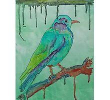 'Coloured Bird' Photographic Print