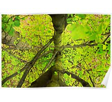 Green leaves. Poster
