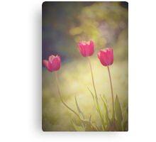 Triple tulips Canvas Print