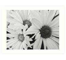 Black and White Daisies Art Print