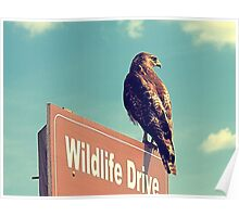 Wildlife Drive Greeter Poster