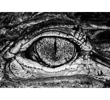 American Alligator, a little closer Photographic Print