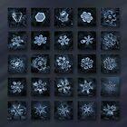 Snowflake collage - Season 2013 dark crystals by Alexey Kljatov