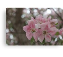 Delicate Pink Blossoms Canvas Print