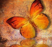 butterfly by motiashkar