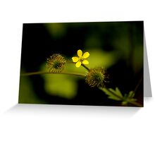 Yellow Woodsorrell Greeting Card