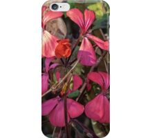 Pink flowers Leith Park Victoria 20160426 6894  iPhone Case/Skin