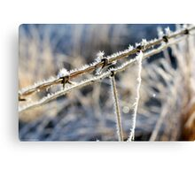 Frozen Barbed Wire Canvas Print