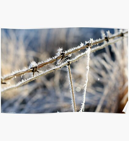 Frozen Barbed Wire Poster