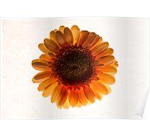 Flower # 7 Poster