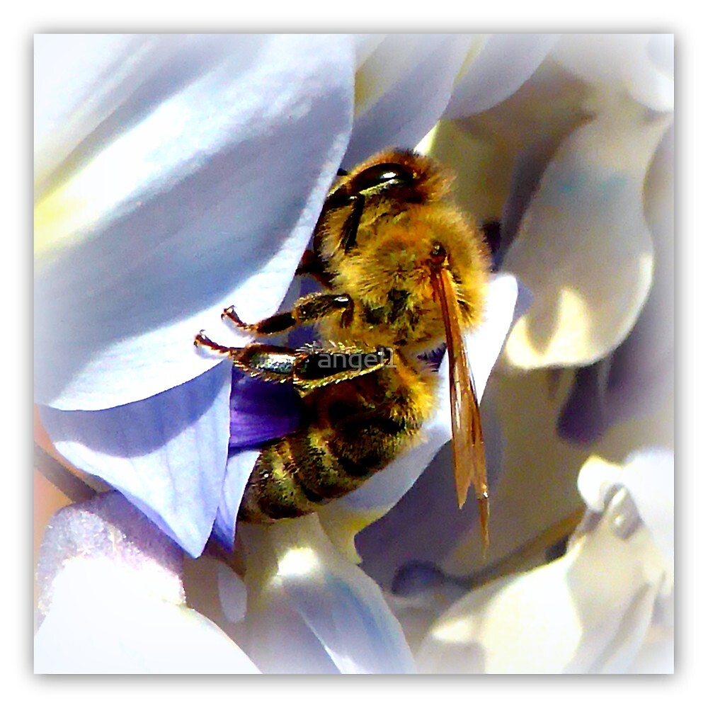 Bee on Wisteria by ©The Creative  Minds