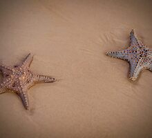 Stars on the Beach - Moreton Island Qld Australia by Beth  Wode