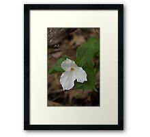 Spring Forest Walk Treasures - White Trillium Flower Framed Print