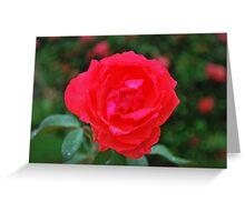Romantic Rose Greeting Card