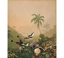 Martin Johnson Heade - Brazilian Hummingbirds 1864. Still life with flowers: flowers, hummingbird, nest, orchid,  lotus blossom, wonderful flower,  egg, passion flowers, garden, magnolias Photographic Print
